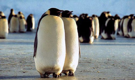 Two penguins standing side-by-side
