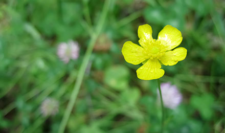 Yellow flower in grass