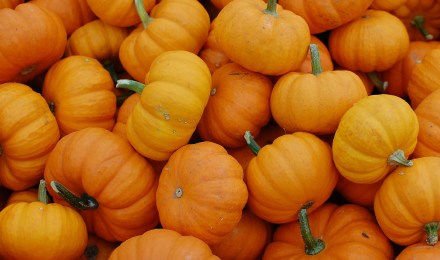 pumpkins-featured